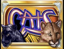 Cats Slot - Photo