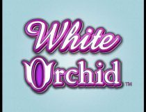 White Orchid Slot - Photo