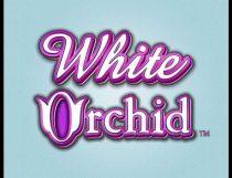 White Orchid Slot - Photo