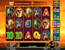 Hot Safari Slot - Photo