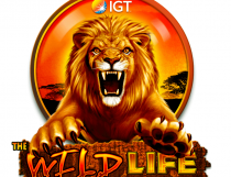 The Wild Life Slot - Photo